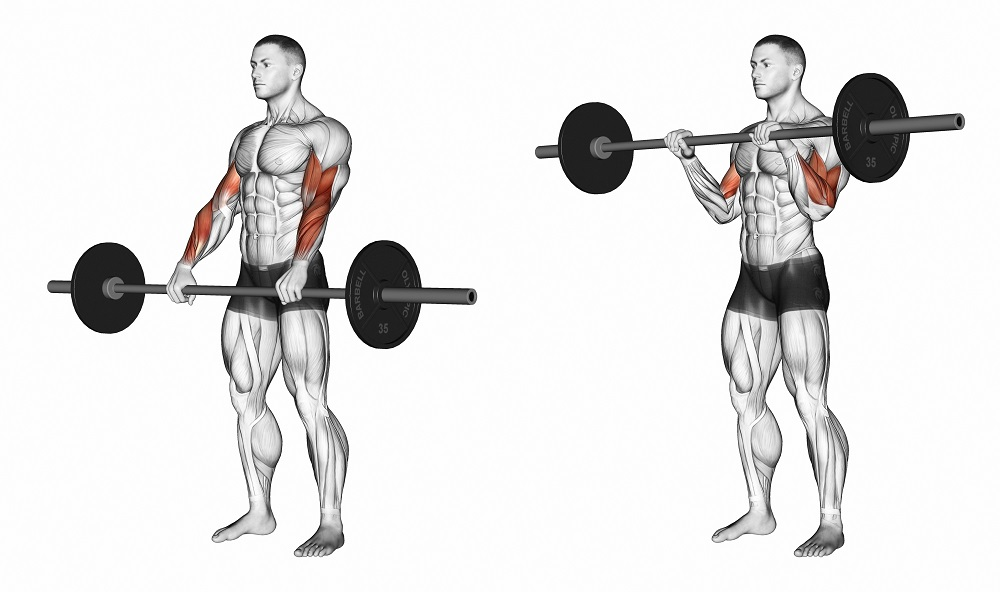 reverse curls with bar